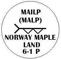 Mailp - Norway Maple Ogham